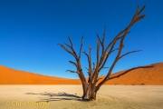 Woestijn - Desert