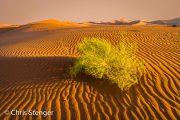 Namib woestijn - Namib desert