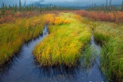 Moeras - Swamp