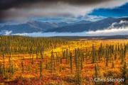 Taiga in herfstkleuren - Taiga in autumn colours