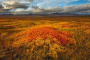 Toendra in herfstkleuren - Tundra in autumn colours