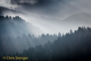 Mist - Fog