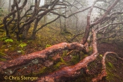 Oerbos - Primeval forest