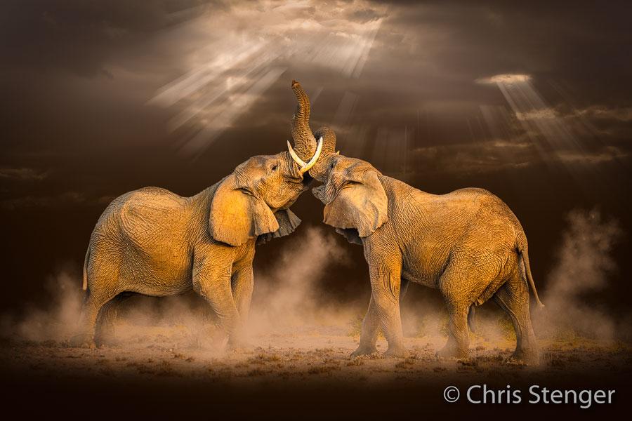 Woestijn olifant - Desert elephant - Loxodonta africana