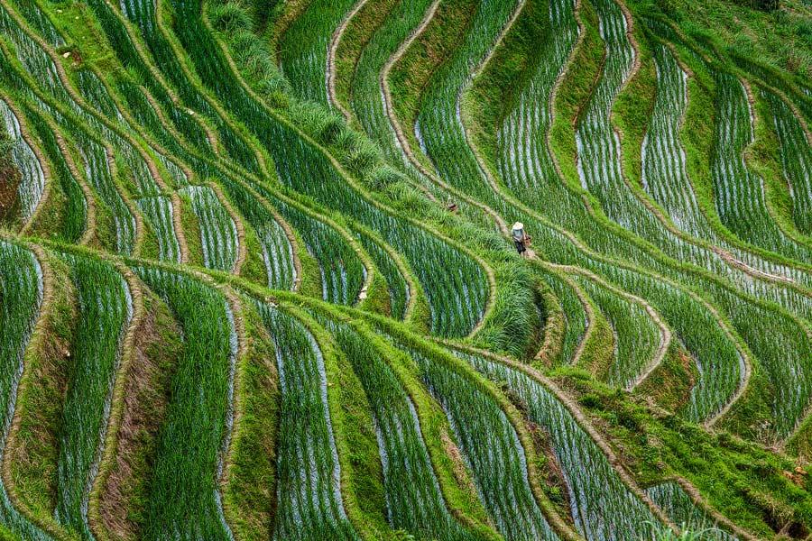 Rijstterrassen - Rice paddies
