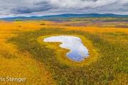 Toendra - Tundra