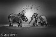 Afrikaanse Olifanen nemen een modderbad - African Elephants take a mud bath