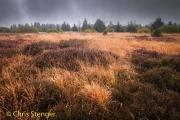 Hautes Fagnes, België - Hautes Fagnes, Belgium
