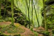 Oerbos bij Echternach, Luxemburg - Primeval forest at Echternach Luxembourg