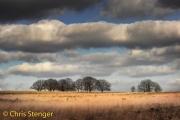 Landschap Veluwezoom - Landscape Veluwezoom