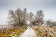 Winter landschap - Winter landscape