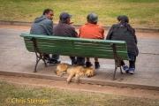 Slapende hond, Argentinië - Sleeping dog, Argentina