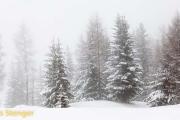 Verse sneeuw-Fresh snow
