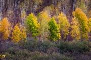 Herfst-Autumn