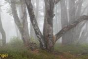 Regenwoud-Rainforest