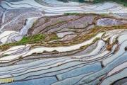 Rijstvelden-Rice fields