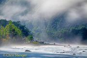Regenwoud - Rainforest