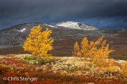 Autumn-Fjell-Noorwegen-05-1266-740px
