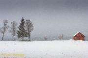Sneeuwbui - Snow storm