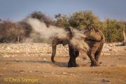 Afrikaanse Olifant neemt een stofbad - African Elephant takes a dust bath