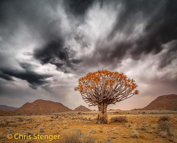 In het gebied tref je veel Kokerbomen aan., een endemische plant die heel karakteristiek is voor het droge zuiden van Namibië en het noorden van Zuid Afrika