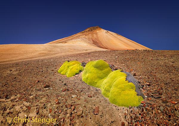 De vulkaan Jurasi in het Lauca nationaal park in Chili met een Yareta plant op de voorgrond