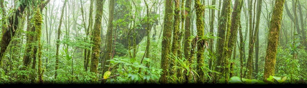 Panorama foto van het vochtige Nevelwoud bij Santa Elena in het centrale deel van Costa Rica
