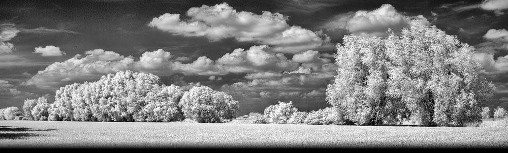 Infrarood opname in monochrome van het landschap in de uiterwaarden bij Huissen
