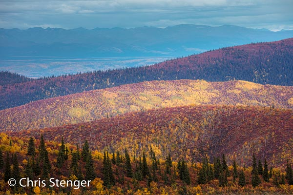Herfstkleuren gefotografeerd langs de 'top of the world' highway op 8 september