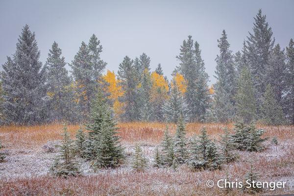De laastste dag in de Rocky Mountains werd het ineens winter toen het ging sneeuwen