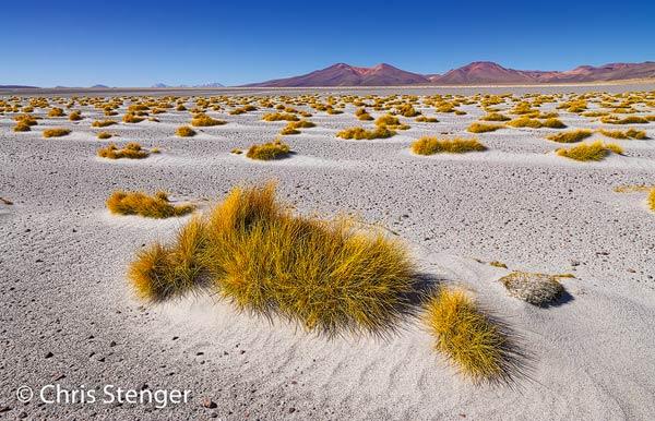 Typisch landschap aan de rand van Salar de Huasco met een vlakte van vulkanische as spaarzaam begroeid met Punagras