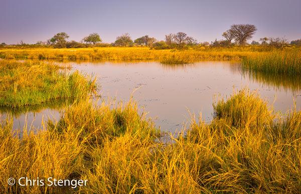 Dit soort meertjes en moerassen zijn het typische leefgebied van de Zwarte reiger. Opnamegegevens: Mamiya 654DF met Leaf digitale achterwand en Schneider Kreuznacht 80mm f/2.8 ISO 100 1/30sec bij f/11 vanaf statief