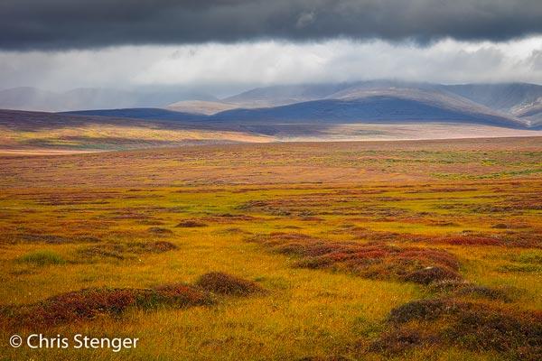 Vanwege het arctische klimaat groeien er rondom Nome vrijwel geen bomen. De vegetatie bestaat meest uit bodembedekkers die in de herfst geweldig kleuren. De rode planten in de foto zijn bosbes struiken.