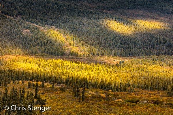 Ik maakte deze foto tijdens een wandeling vanaf de Nabesna road. Vanaf een hooggelegen uitzichtspunt hadden we een fraai uitzicht op de bergen rondom en we bleven hier meer dan een uur om het landschap te fotograferen in het steeds veranderende licht. Canon 5Ds R met EF 100-400mm f/4.5-5.6 IS II USM ISO100 1/40sec bij f/9.0 vanaf statief