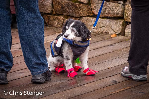 Geheel voorbereid op de barre weersomstandigheden in Alaska, maar helaas kon het arme dier bijna niet lopen in deze outfit