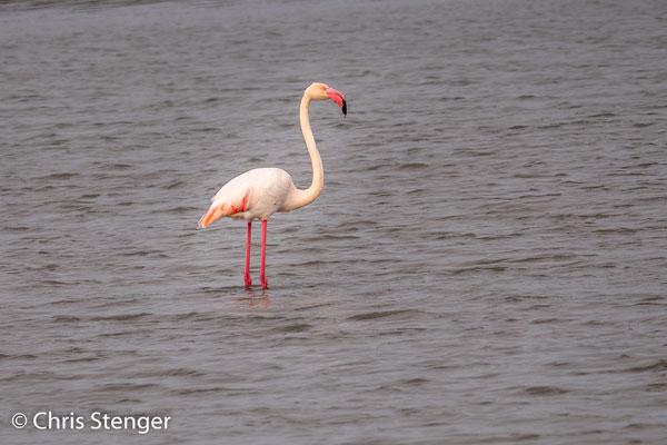 Deze zoutpannen zijn een beschermd natuurgebied en er zijn een aantal vogelobservatie hutten aan de rand van de meertjes gebouwd. De Flamingo's staan echter ver weg en ze laten zich daarom maar lastig fotograferen.