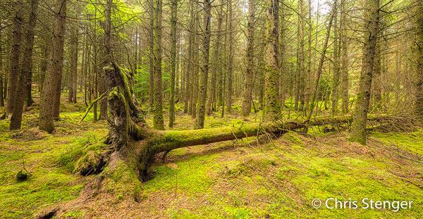 Geen oerbossen op Arran, maar sommige productie bossen kunnen ook fraai zijn. Panorama van 2 samengevoegde liggende opnames, Canon 5DsR met TS-E 17mm objectief ISO100 0,6sec bij f/10 vanaf statief