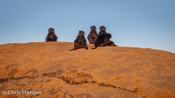 De zon is net onder en dit groepje maakt zich gereed om de nacht door te brengen op de graniet rotsen hoog boven onze kampeerplaats