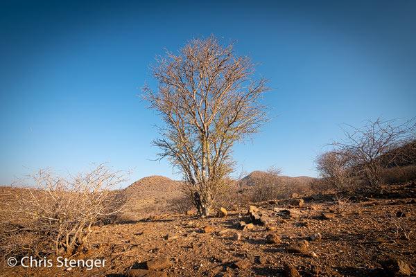 Dit droge landschap met Acacia boom is typisch voor de omgeving van de hoofdstad van Namibië