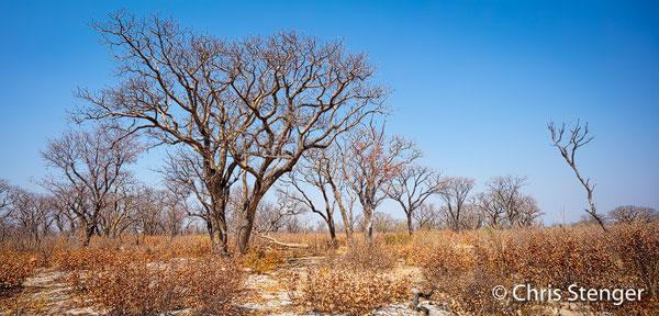 De levenbrengende Okavango rivier stroomt een aantal kilometers ten oosten van deze weg en en veel zie je er dus niet van. Je rijdt feitelijk door de droge Kalahari woestijn zonder dat je je bewust bent van de moerassen een paar kilometers verderop