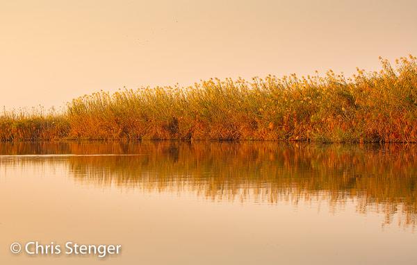 Ook deze foto maakte ik vanuit een boot. In landen als Namibië en Botswana is het voor een fotograaf altijd jammer om te zien dat de periode van fraai licht rond zonsopkomst en zonsonder maar heel kort duurt.