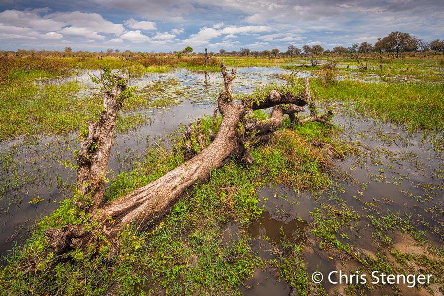 Ik maakte deze foto in september 2009. De rivier stroomt door een vochtige spoelvlakte met moerassen
