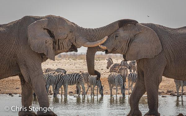 Ik fotografeerde deze spelende Olifanten bij een waterput in het Etosha National Park in het noorden van Namibië