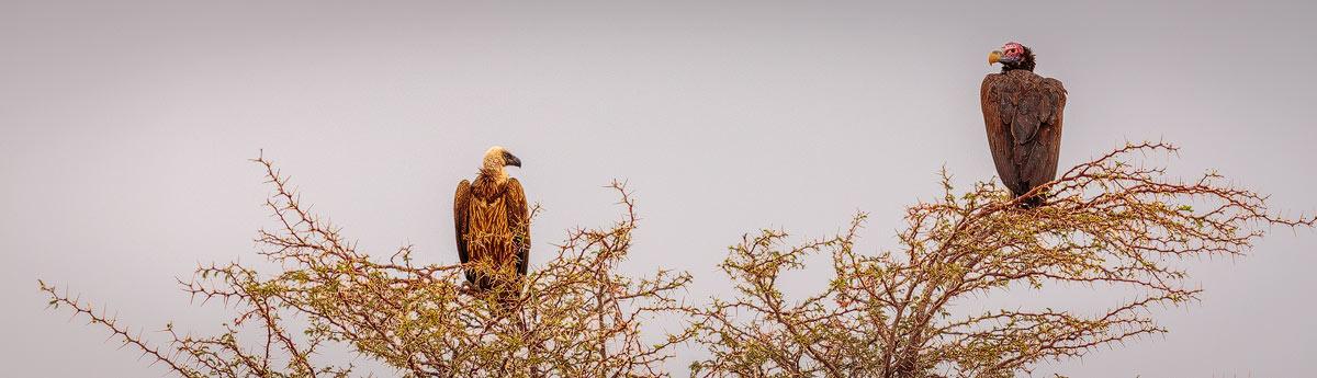 Chris Stenger Natuurfotografie: vogels in Afrika zijn vaak eenvoudig te fotograferen omdat ze weinig schuw zijn.