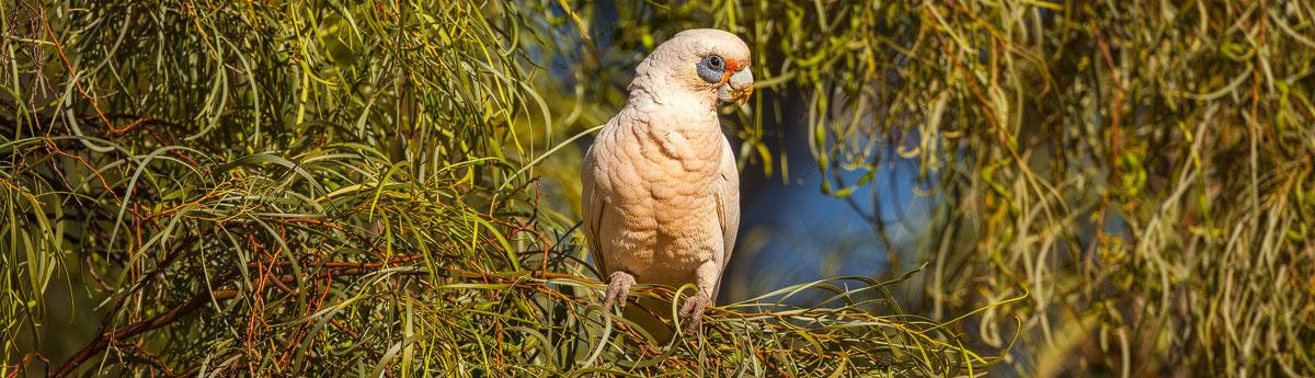 Australië; foto's door Chris Stenger Natuurfotografie, Landschapsfotografie en Reisfotografie